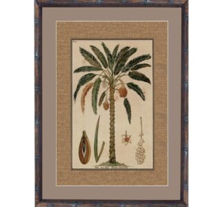 Buy Luxury Small BV Date Palm 3 BVRS-3 Online in NSW