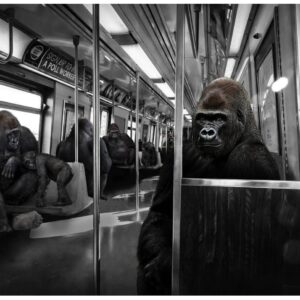 """buy luxury Gillie and Marc Limited Photo Print - """"Gorillas work hard and play hard"""" in NSW"""