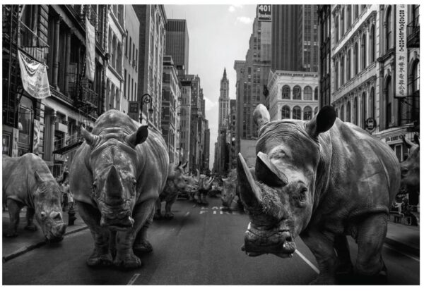 """Gillie and Marc Limited Photo Print - """"Rhinos at home in New York"""" in Australia"""